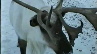 Саха-Якутия (Дикие животные)