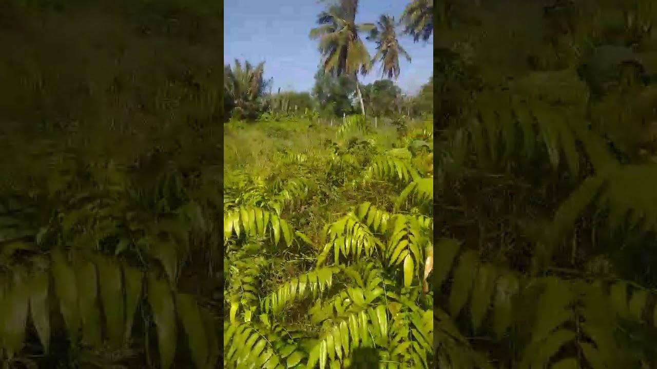 chính chủ cần ra miếng đất đẹp như Ngọc Trinh 0908950318 Nhà Đất Long An Giá Rẻ  #NHÀĐẤTLONGANSIÊURẺ