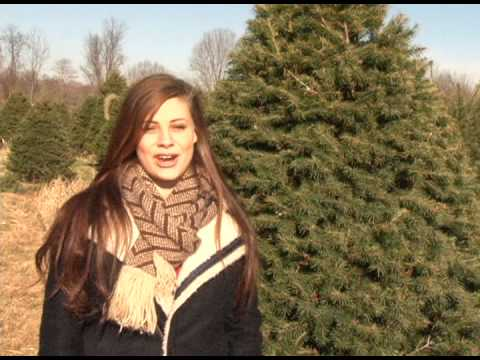 Holiday Trees Local Family Farm Offers Cut