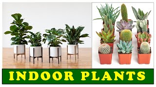 How to grow indoor plants?  Order now |  Indoor plants |  cactus | plant house