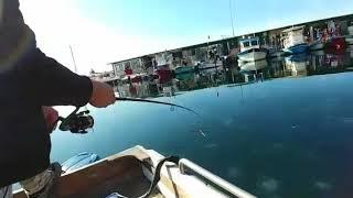 Ot ve deniz anasi ile Balık avı an itibariyle canlı