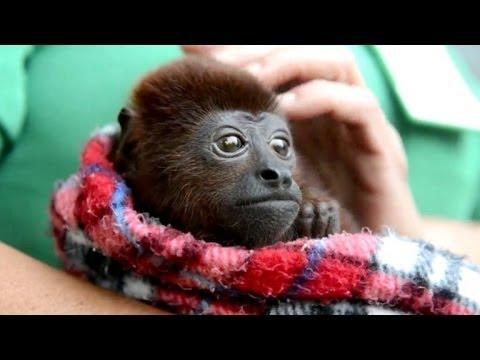 Aprendiendo a ser mono en un zoo de Colombia
