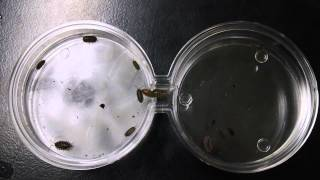 ap biology pill bugs experiment