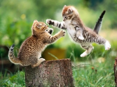 Funny kittens playing with ball #1
