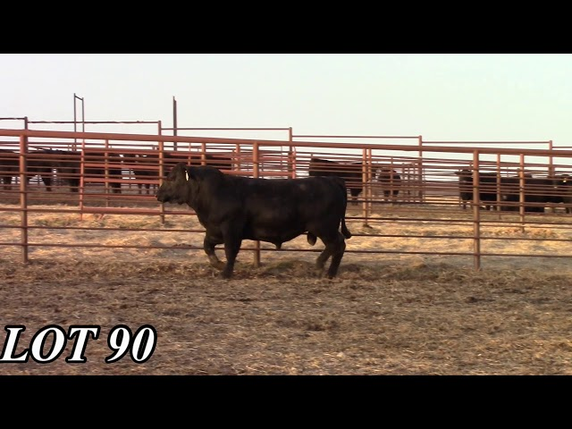 Mead Angus Farms Lot 90