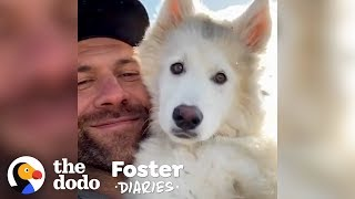 Lee Asher With 10 Dogs Decides To Foster One More | The Dodo Foster Diaries