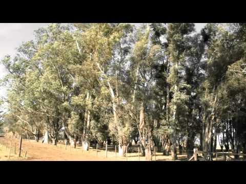 Viento magico en honor a Michael Fox - Una oda a la vida en Quiroga - Demarchi - Buenos Aires