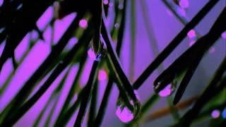 Björk - Arisen my Senses [CLIP - FAN MUSIC VIDEO]