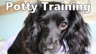 How To Potty Train A Docker Puppy - Docker House Training Tips - Housebreaking Docker Puppies Fast