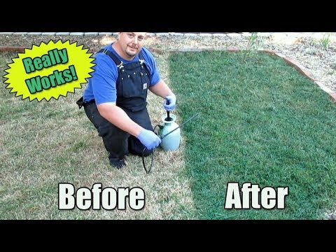 Restore Your Lawn Using Green Grass Paint!