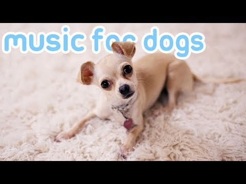 music-your-dogs-trust!-15-hours-of-sleep-songs-for-anxious-dogs!