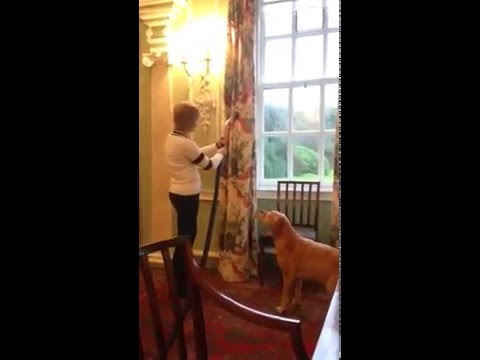 Vacuuming the curtains in the dining room