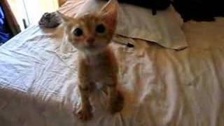 Hungry Kitten