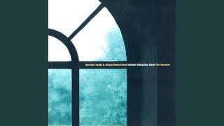 Trio Sonata No. 3 in D Minor, BWV 527 (arr. for recorder and harpsichord) : III. Vivace