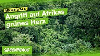 Angriff auf das Grüne Herz Afrikas