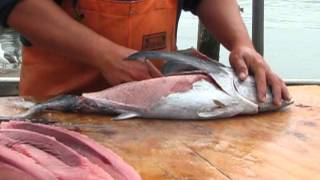 How to Fillet an Oregon Albacore Tuna