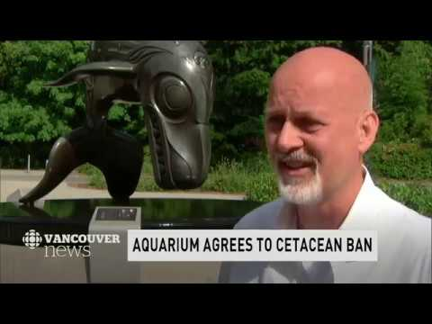 WATCH LIVE: CBC Vancouver News at 6 for June 25 — Sunshine Coast Fire, Aquarium Ban, EV Rebate