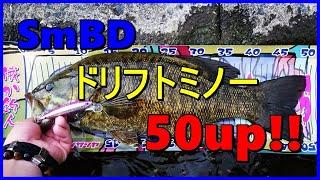 【川スモールマウスバス】SmBDドリフトミノーで50up!?