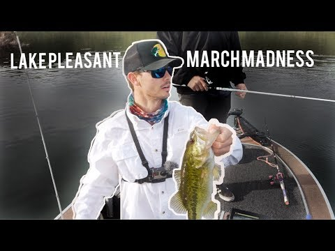 Lake Pleasant Fishing Is OUTSTANDING!! | Bass And Striper
