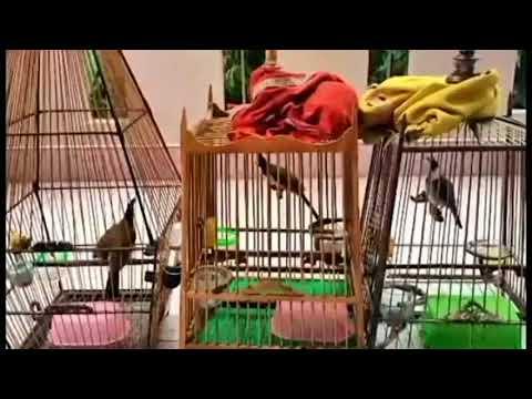 NUMBER 1 bird food - Through years n birds
