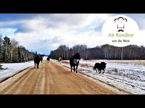 Living the Canadian Dream: Horse riding in the middle of nature
