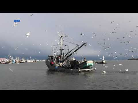COMMERCIAL FISH BOATS BC CANADA 4K 2020