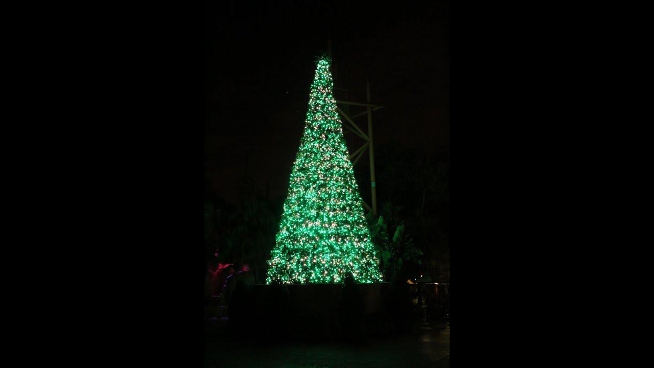 Christmas Tree Terrace Show in Jungala Busch Gardens Tampa, FL 12/23 ...