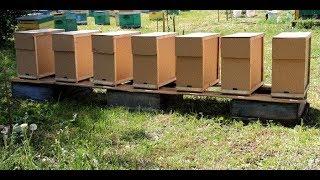 Пчеловодство.Размножение пчёл - Отводки.Часть №1