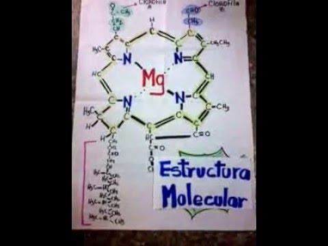 Estructura Molecular De La Clorofila Tipos Y Función Youtube