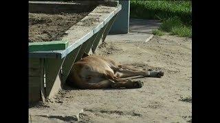 «Травят ядом и сжигают»: работник рассказал правду об отлове собак