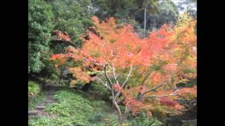 秋の侘しい 雰囲気を味わい下さい BGMは 姫神『翼』です 静止画を元に ...