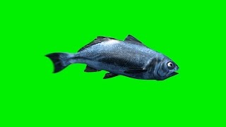 Green Screen Fish Swim - Footage PixelBoom