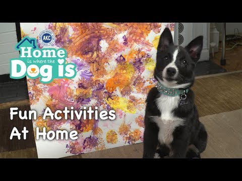 Episode 9  Fun Activities at Home | Home is Where the Dog is