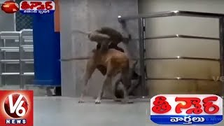 MonkeyVsDog #KesamudramRailwayStation Subscribe Youtube at http://g...