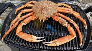 Giant SPIDER CRAB Catch and Cook