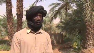 قلق المزارعين الموريتانيين من آفة السوسة الحمراء