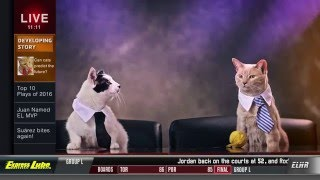Express Lube - Cat Commercial