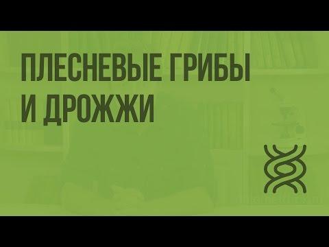 Практическая работа «Выращивание белой плесени мукора»