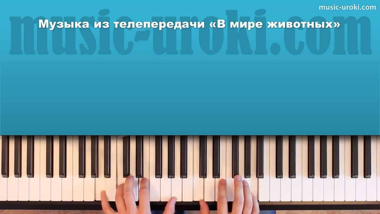 """Музыка из телепередачи """"В мире животных"""". Как играть на ..."""