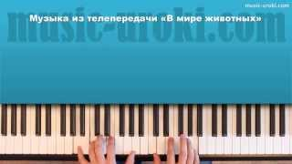 """Музыка из телепередачи """"В мире животных"""". Как играть на пианино."""