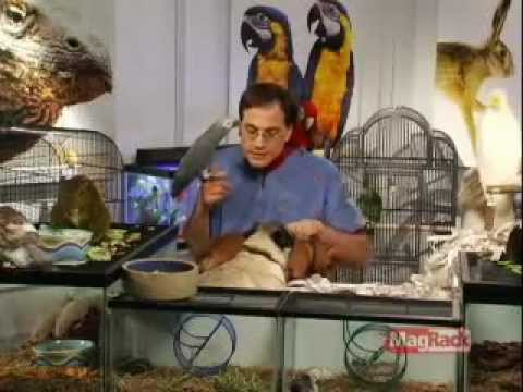 The Pet Shop with Marc Morrone - Birds 101