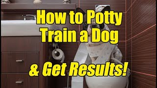 How to Potty Training a Dog And Get Results!