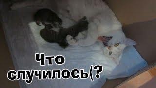 VLOG:Кошка родила/У нас родились котята, но не всё хорошо( Почему котёнок погиб