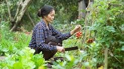 Vườn cà chua chín đỏ, mẹ làm các món ngon từ cà chua ( Dishes From Tomatoes ) I Ẩm Thực Mẹ Làm