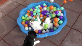 Funny Cat Compilation Video - 4K Ultra Hd 2160p - ベスト猫のビデオ - Original thumbnail