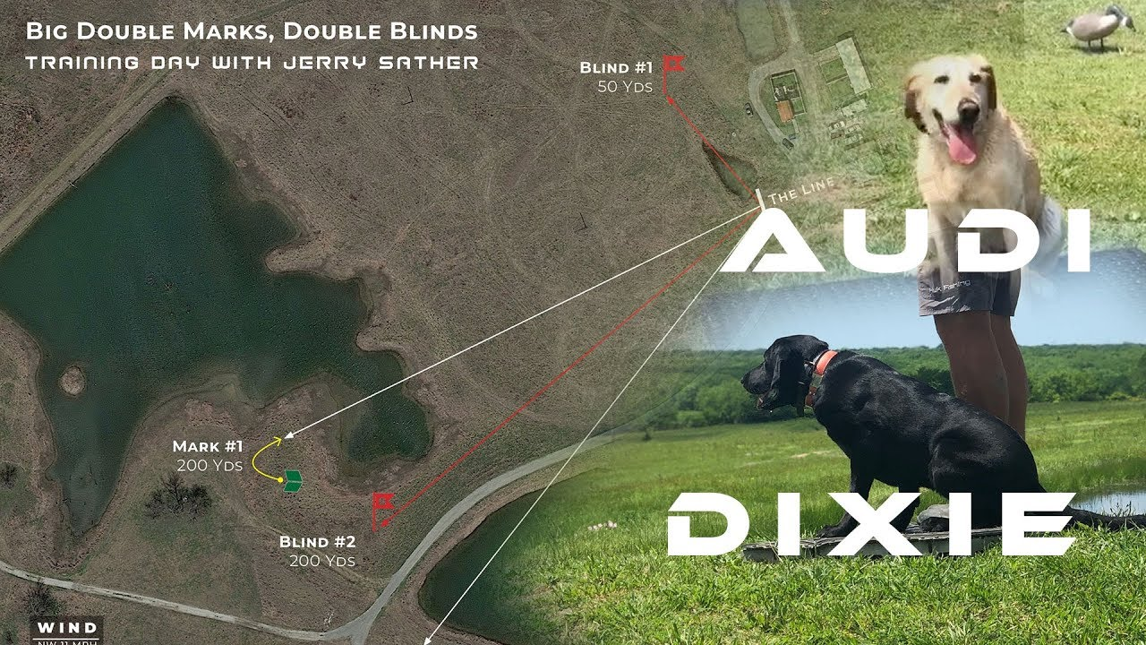 Big Double Mark Double Blinds With Dixie Audi