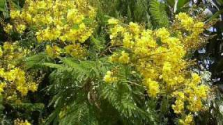 Radhachurar Phool Guji by Usha Mangeshkar (Old Assamese Song)