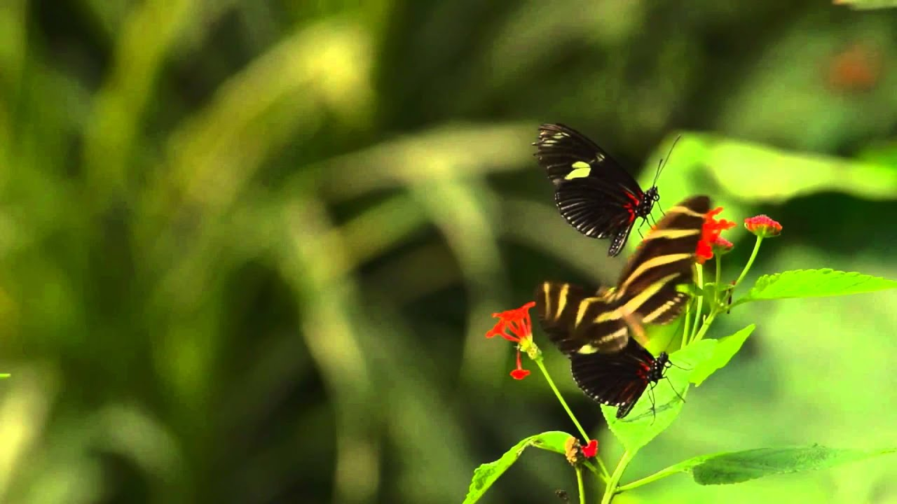 Wonderful Nature ¨Butterflies¨ - YouTube