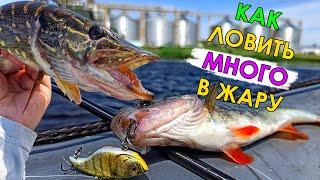 ОТ ЭТОГО РЫБА СХОДИТ С УМА В ЖАРУ Рыбалка на спиннинг 2021 Ловля щуки и окуня на джиг и раттлины