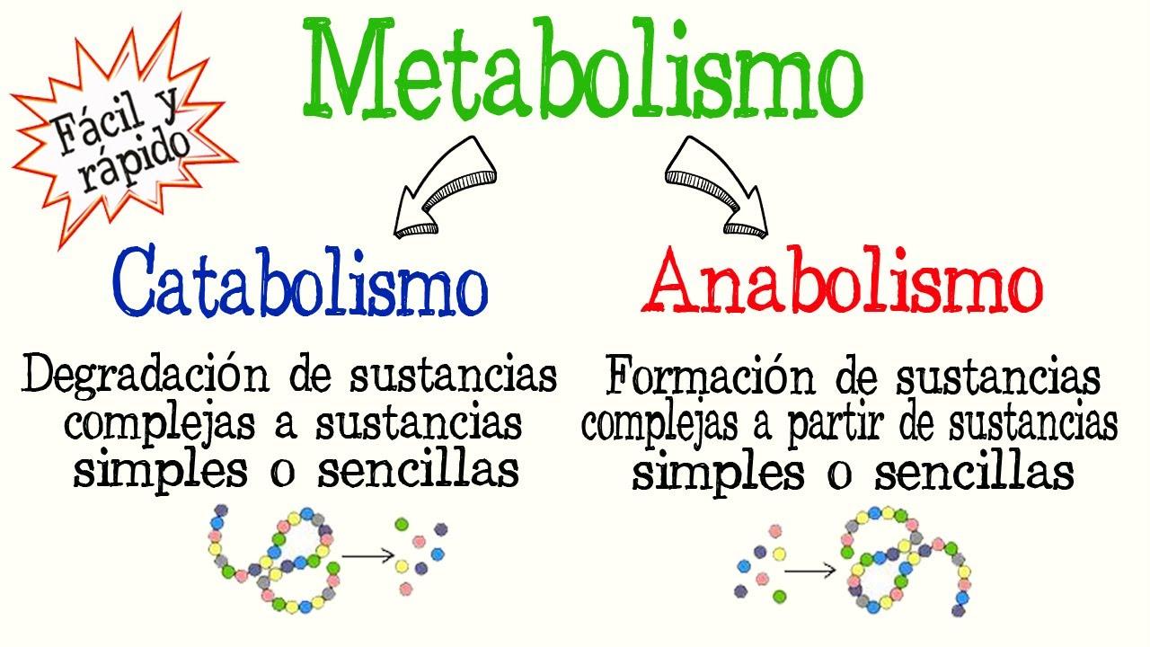 Qué Es El Metabolismo Catabolismo Y Anabolismo Diferencias Fácil Y Rápido Biología Química Youtube